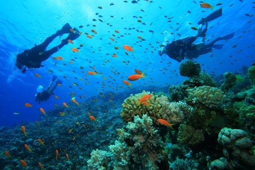 scuba diving adventures image