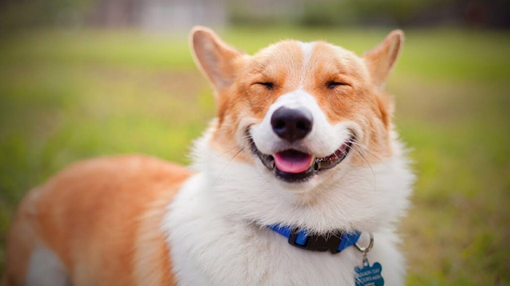 Smiling Dog images and wallpaper